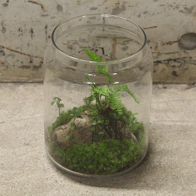 plants03